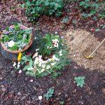 Das Grab von Gisela Kummert unter dem Baum Nr. 91 in der Waldruhestätte Meerbusch